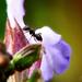 A hangya (Formicidae)
