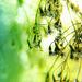 Zöld Apró virágok Cseppek