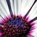 Növény Virág Ősz
