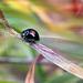 Fekete katica Ősz