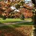 Erzsébet kert Ősz