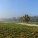 Köd Ősz Táj