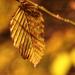 Ősz Levelek Sárga