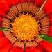 Tavasz Virág