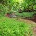 Erdei séta Patak
