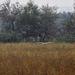 Táj Szürke gém (Ardea cinerea) Ősz