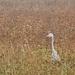 Táj A szürke gém (Ardea cinerea) Ősz