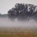 Őszi köd