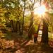 Erős fény Erdő Ősz