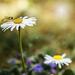 Tavasz Virág Rovar