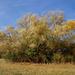 Ősz Hatalmas széles fa