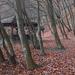 Őszi erdő Sopron
