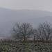 szürke ködös táj