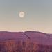 Hajnali Hold