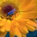 Virág Rovar Május
