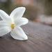 Virág tavasz fehér