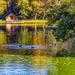 Martonvásár - Brunszvik-kastély, kastélyparki tó