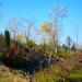 Bugac, ősborókás