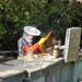 Méhész munka közben