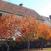 Kaba, az ősz színeibe öltözött fák
