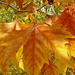 Szarvas, őszi levelek