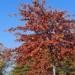 Győr, az ősz színei