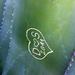 Egy kaktusz üzenete...