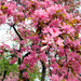 Gyűjtemény - Sakura