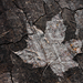 Leaf of history