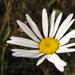 Album - Viragok/Flowers