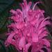 Album - Dézsás növényeim