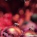álló dísz december kisklau