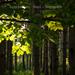 erdő indafoto 2048x1536 másolata
