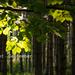 erdő indafoto 2560x1440 másolata
