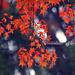 piroslevelek indafoto 2048x1536 másolata