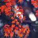 piroslevelek indafoto 2560x1440 másolata
