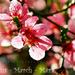 Tavaszváró - március (12)