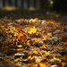 Ősz-szőnyeg