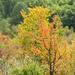 Fák, színek...