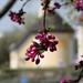 Tavaszi Kápolna