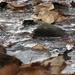Fagyott patak