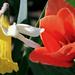 Tavaszi virágaim