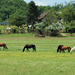 Legelésző lovacskák
