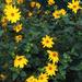 83 virág