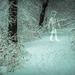 Album - 2013 hóhelyzet