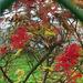 őszi piros bogyók