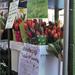 jótékonysági tulipán vásár