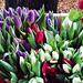 tavaszi színes