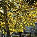 őszi ragyogás