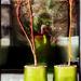 zöld cserepekhez zöld sál